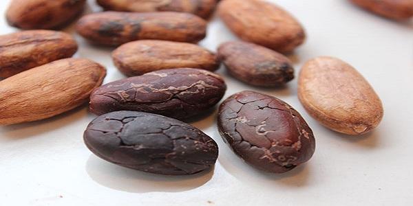 خرید دانه کاکائو