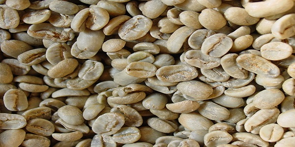 واردات انواع دانه قهوه خام