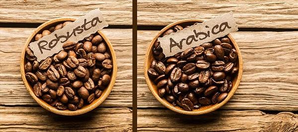 مرکز انواع قهوه روبوستا و عربیکا